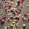 Rose Petals